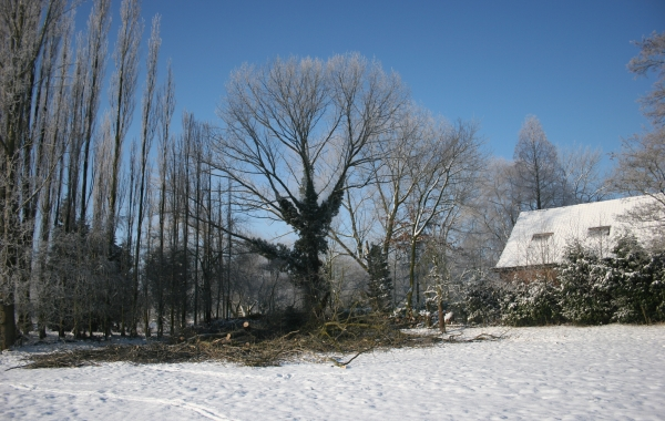 Bomen kappen Echteld